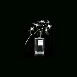 Zara Flor de Azahar Bayan Parfüm