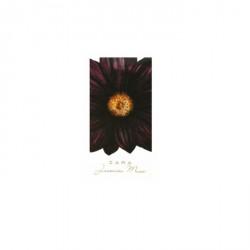 Zara Jasmine Musc Bayan Parfüm