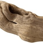 Dalgaların karaya attığı odun