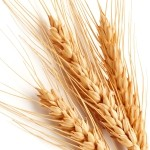 Buğday