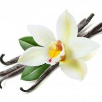 Vanilya ve Vanilyalı Parfümler