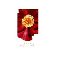 Zara Bulgarian Rose